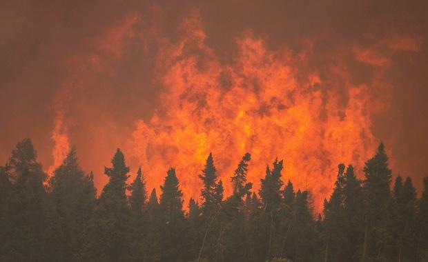 Strażacy: 9 tys. pożarów w lasach od stycznia; więcej niż w całym roku ubiegłym