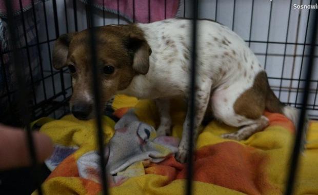 12 psów, 4 koty i jeż żyły w fatalnych warunkach. Policjanci odebrali zwierzęta właścicielce