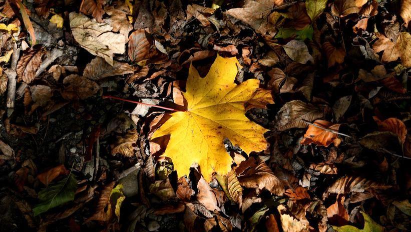 Dziś rozpoczyna się kalendarzowa jesień