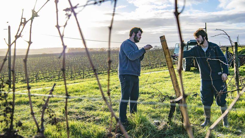 Produkcja wina we Francji spadnie w tym roku o 29 procent
